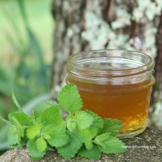 lemon-balm-honey-syrup-1024x1024