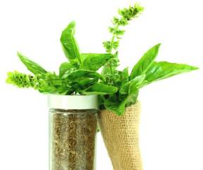 holy-basil-fresh-leaves-and-dried-herb-cropped